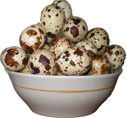 Правила хранения перепелиных яиц