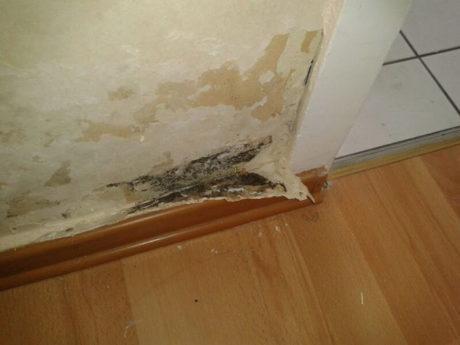 Порядок проведения экспертизы ремонта квартиры